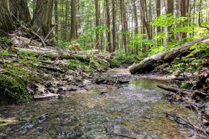 Current carbon cycle models may underestimate the amount of carbon dioxide released from the forest soil during rainy seasons