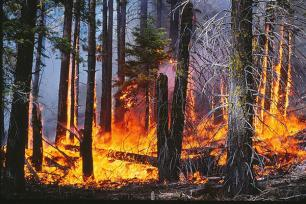Controlled burn in mixed conifer forest