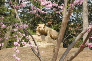 The Nittany Lion Shrine on the University Park campus of Penn State.