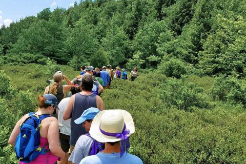 A group of Centred Outdoors hikers explores a trail in Black Moshannon State Park.