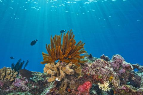 Penn State was recognized by the coral reef community with making significant contributions to coral reef research