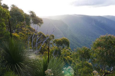 Just north of where the Nightcap Oaks grow in the World Heritage Gondwana Rainforests of Australia