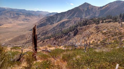 Dry forest margins in the western United States may be more resilient to climate change than previously thought