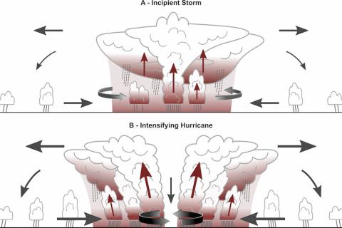 The cloud greenhouse effect accelerates tropical cyclone development.