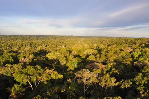 Overview of the Brazilian rainforest