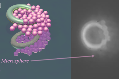 Model of a pair of microtori picking up particles, left. Microtori picking up particles when a magnetic field is applied, right