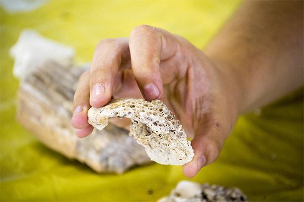 Fossilized seashell