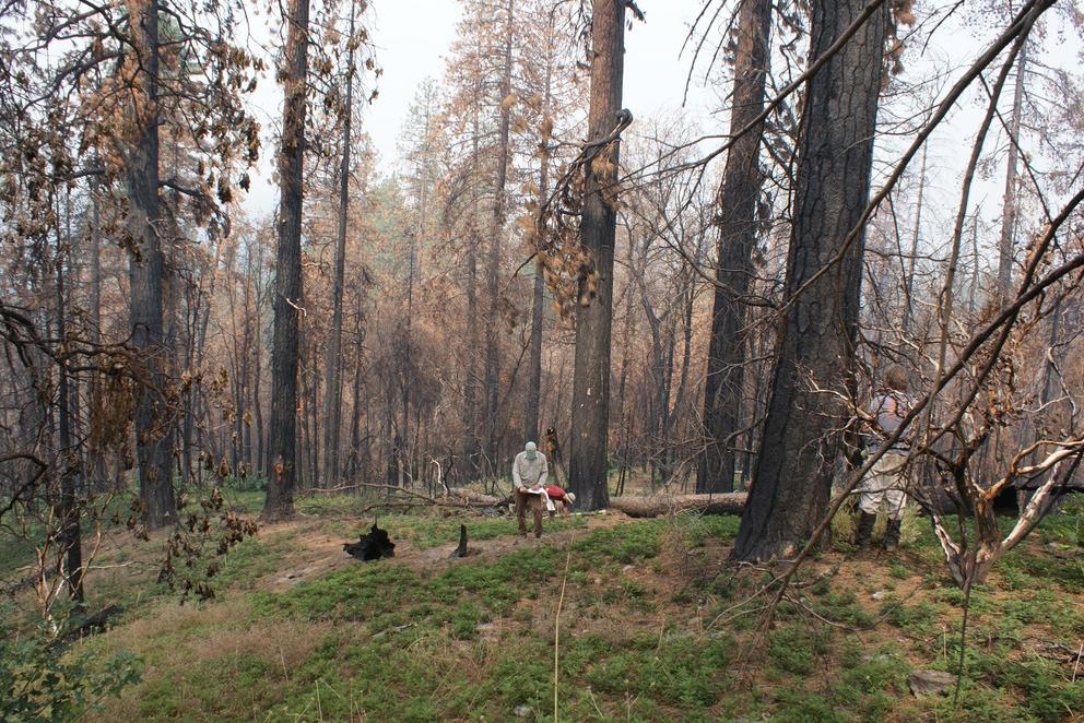 Researchers measure post-fire carbon emissions in Yosemite National Park.
