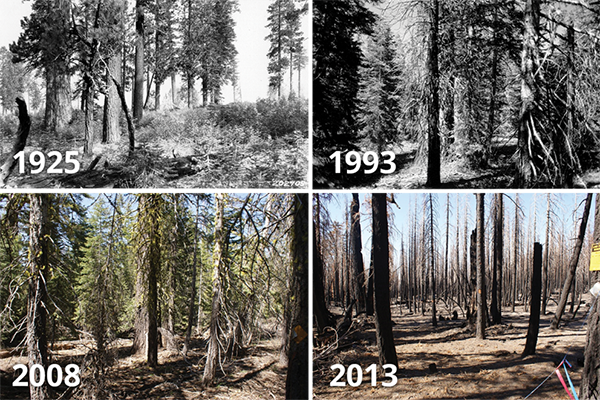 Repeat photographs of the same location within Lassen Volcanic National Park showing increases in tree density