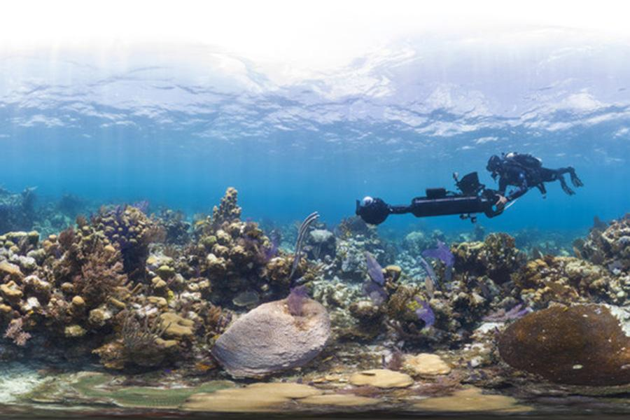 "Filming Glovers Reef for the documentary ""Chasing Coral."""