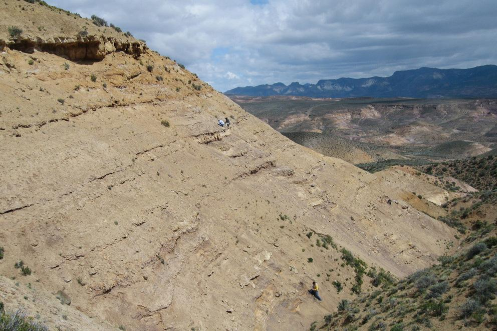 Researchers collect fossils cliffside in the Lefipan formation in southern Argentina.