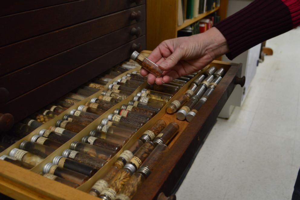 Seed specimens are stored in a wooden seed-storage cabinet with shallow drawers to accommodate the tiny glass vials.