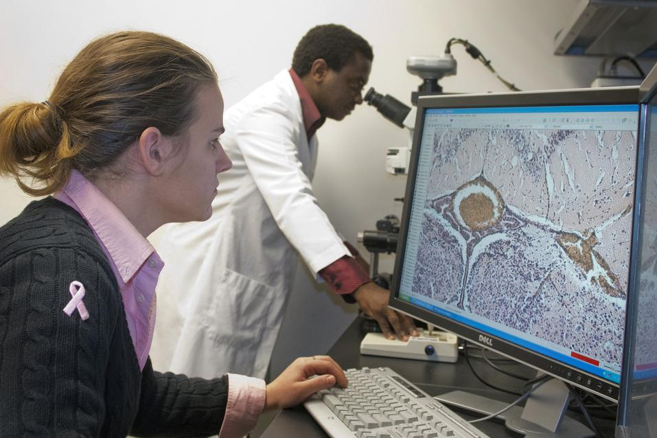 Center for Neural Engineering researchers examine brain samples from cerebral malaria on a computational microscopy screen