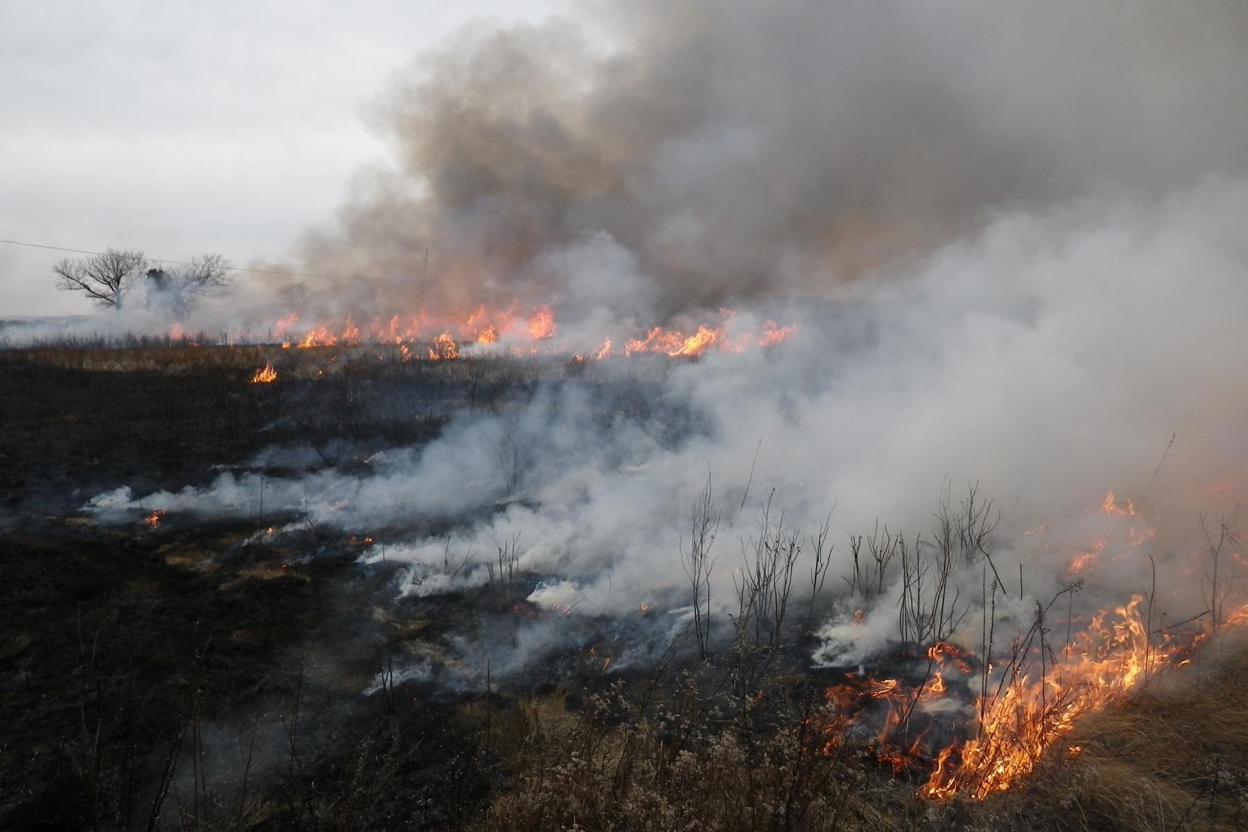 A controlled burn helps promote native species in a brackish marsh on the Delmarva Peninsula east of Chesapeake Bay.